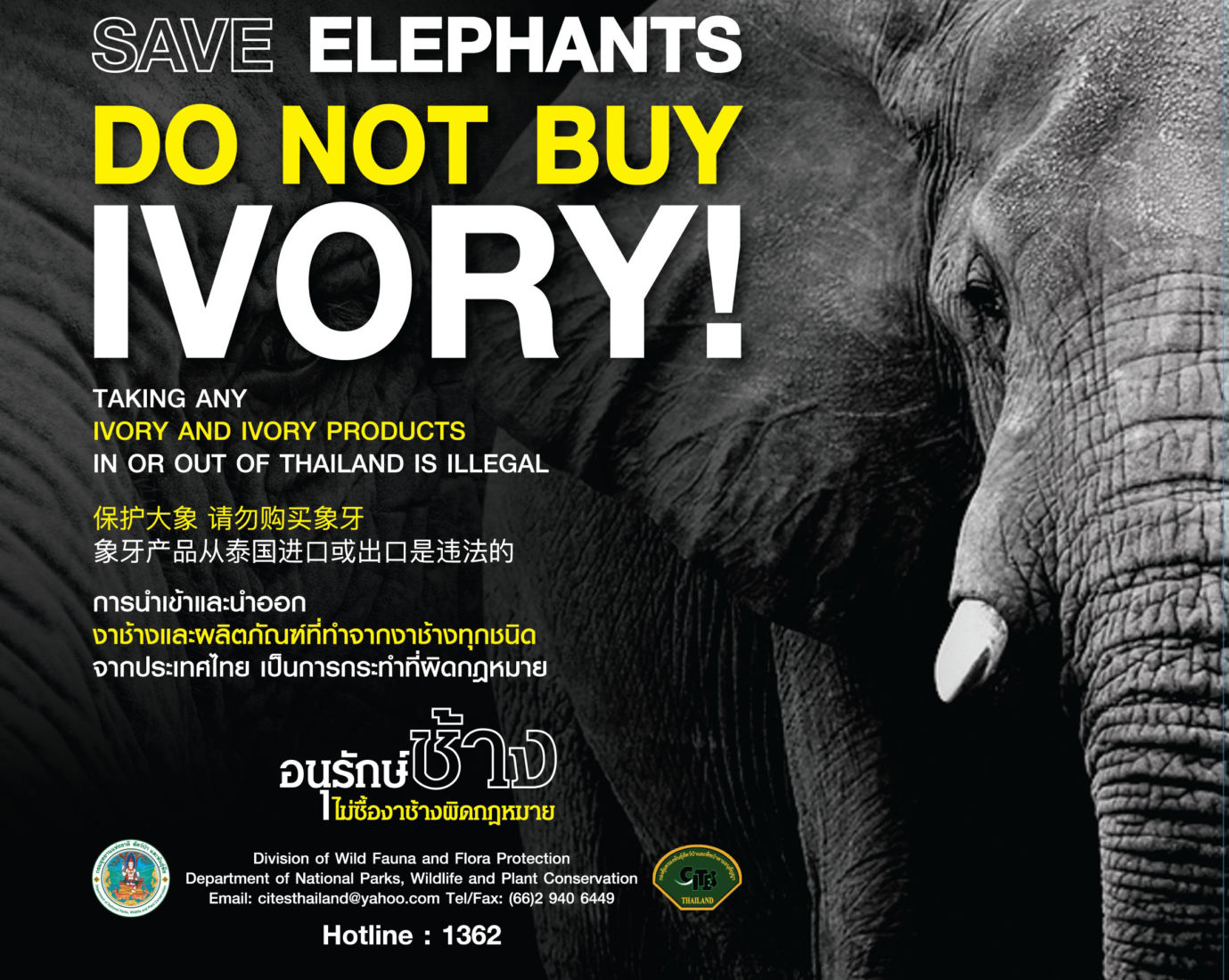 Thailand still a top destination for Chinese ivory buyers | News by Thaiger
