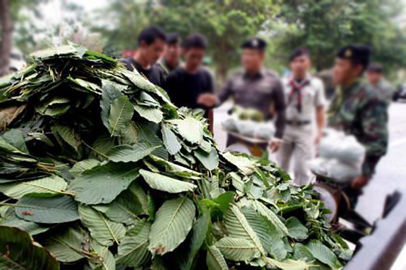 Justice minister says he'll speed up kratom decriminalisation | The Thaiger