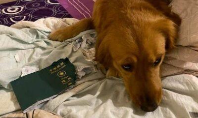 Bị chó cưng cắn hộ chiếu, cô gái thoái dịch virus corona | The Thaiger