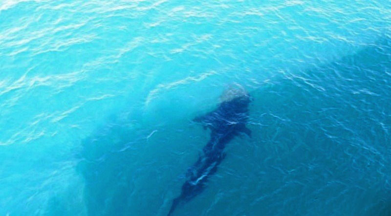 75 year old tourist 'attacked' by small unidentified shark in Phang Nga | News by The Thaiger