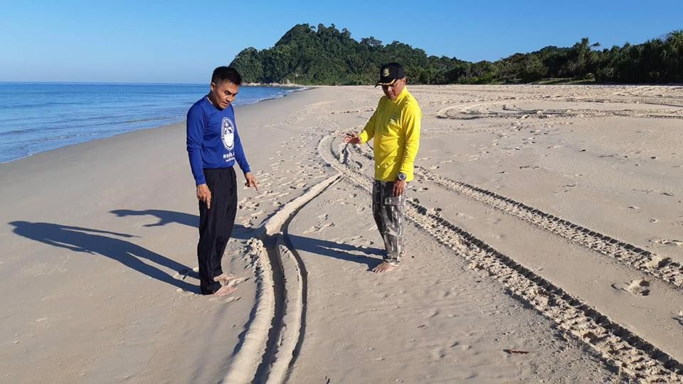 Turtle egg thieves raid a leatherback turtle nest in Phang-nga | The Thaiger