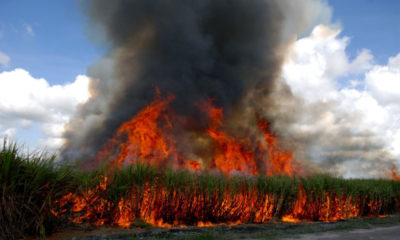 Central Thailand farmers ignore orders to stop burning off their sugar cane | The Thaiger