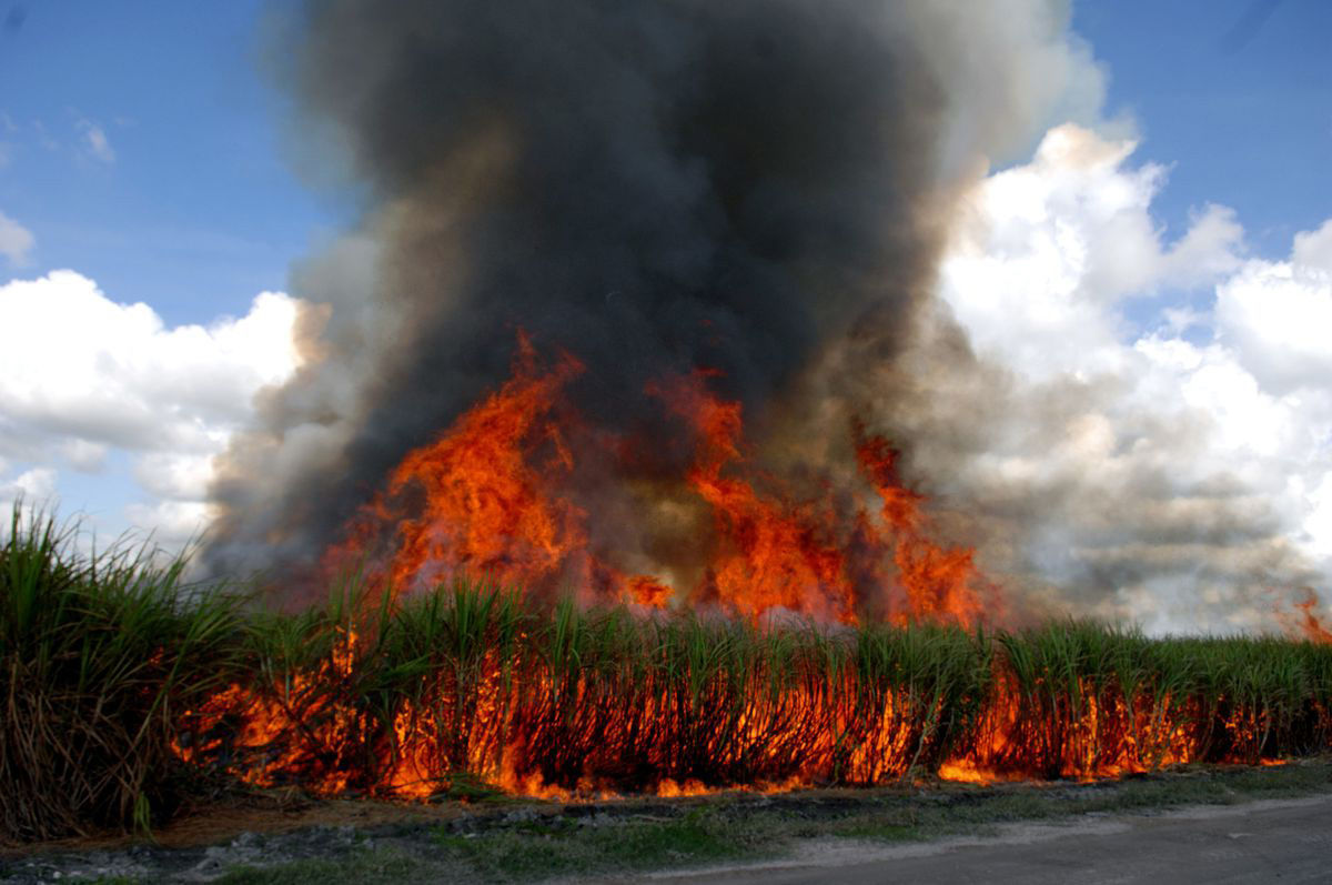 Central Thailand farmers ignore orders to stop burning off their sugar cane | Thaiger