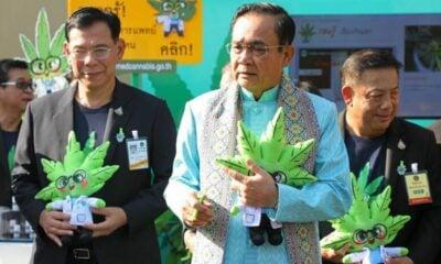 """Dr. Ganja"" is helping promote medical marijuana in Thailand | Thaiger"