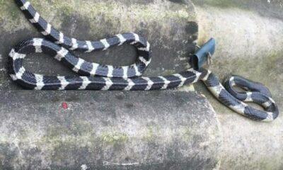 Hà Tĩnh: Bé trai 20 ngày tuổi bị rắn cắn chết | The Thaiger
