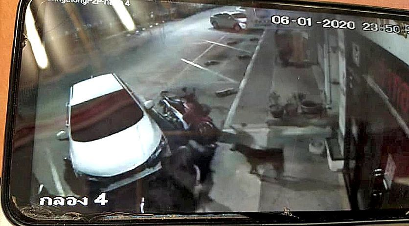 Thai woman's car trashed in Sattahip by stray dogs chasing a cat | News by Thaiger