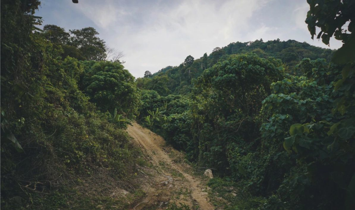 10 ways Thailand is moving to a greener future | News by The Thaiger