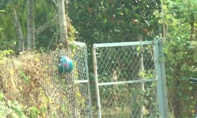 Bình Phước: Đánh chết hàng xóm vì bò đi lạc | The Thaiger