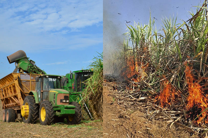 Sugar industry asks the government to subsidise harvesting machinery