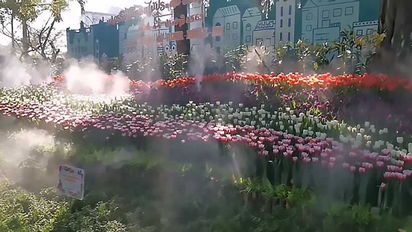 44th Chiang Mai Flower Festival in full bloom   News by Thaiger