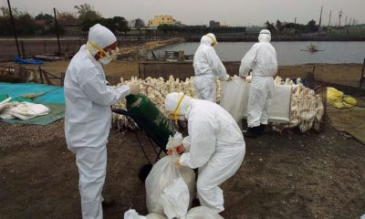 China now battling an outbreak of bird flu in Hunan | Thaiger