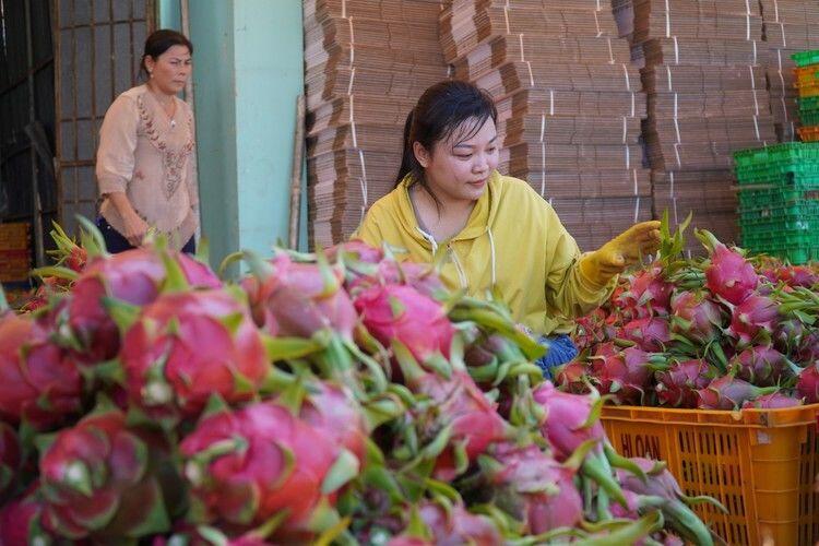 Giá thanh long bất ngờ nhảy vọt mặc dịch corona hoành hành | News by Thaiger