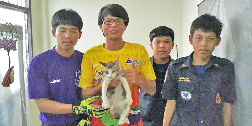 Missing moggie rescued in Rayong | News by Thaiger