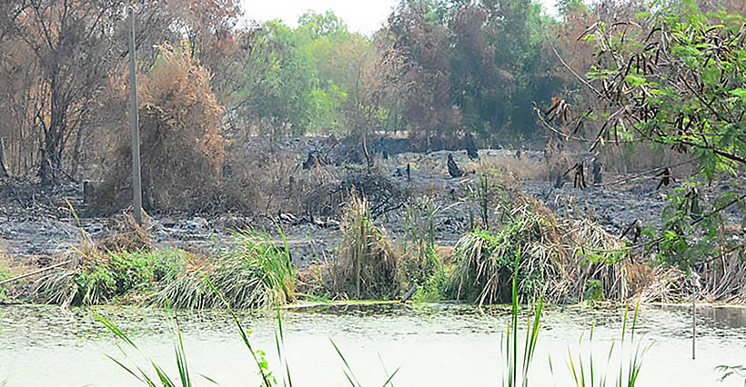 Pathum Thani villagers coping with heavy smoke from rubbish fires | News by Thaiger