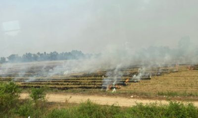 Smoke from plantation fires continues to choke central and northern Thailand | The Thaiger