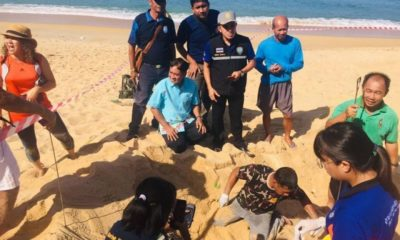 Rare leatherback turtle lays eggs in Phuket's Mai Khao   Thaiger