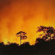 Wildfire damages over 2000 rai in national park | The Thaiger