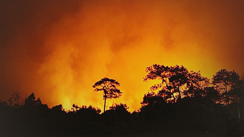 Wildfire damages over 2000 rai in national park | Thaiger