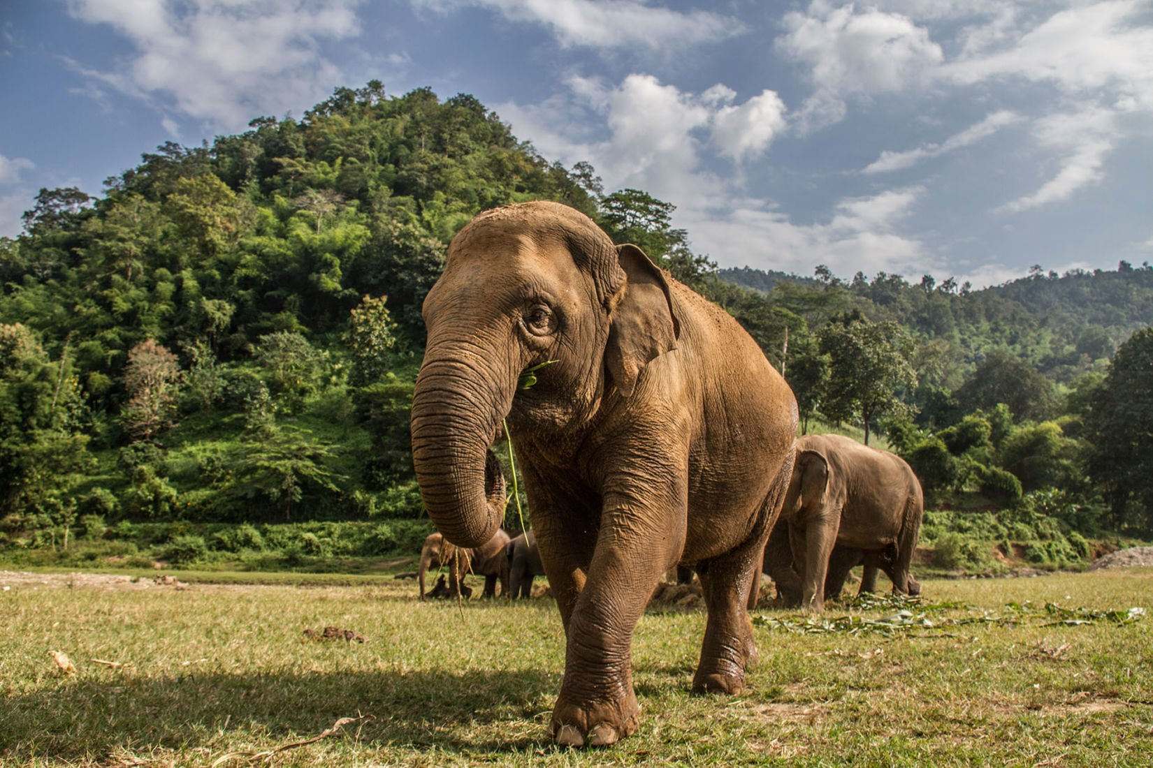 Potential catastrophe facing Thailand's elephant camps | News by Thaiger