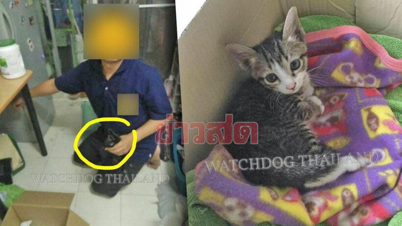 Kitten killer arrested in Chiang Mai | Thaiger
