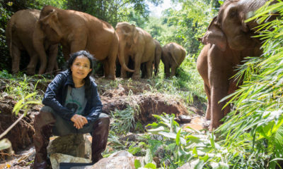 Potential catastrophe facing Thailand's elephant camps | The Thaiger