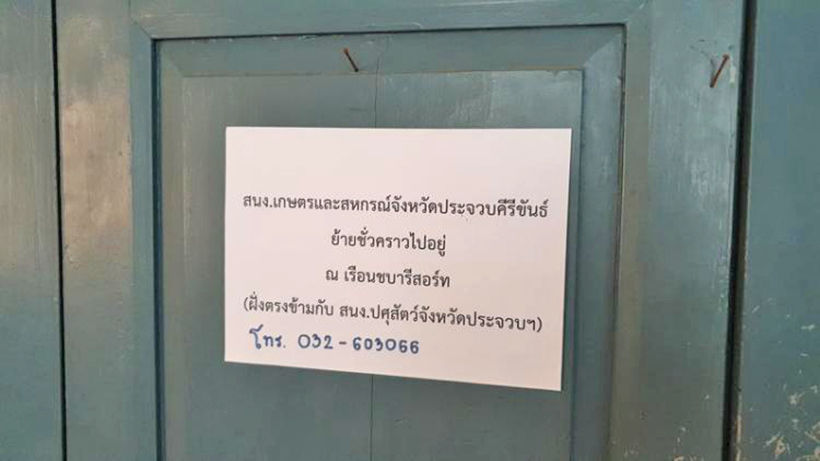 Monkeys plunder town hall building in South, apparently searching for food | News by Thaiger