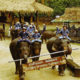 Thousands laid off, millions of baht lost as Chiang Mai elephant camps close | Thaiger
