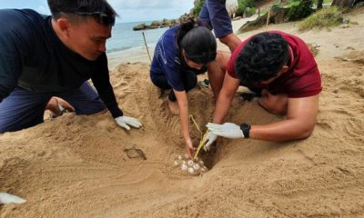 Samui's Banyan Tree Hotel acts to protect sea turtle nest | The Thaiger