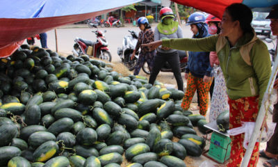 'Giải cứu dưa hấu' bị bắt đóng tiền bảo kê   Thaiger