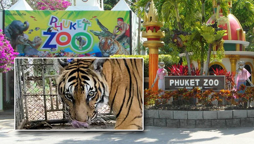 Four arrested for shooting videos at Phuket Zoo and soliciting donations | Thaiger