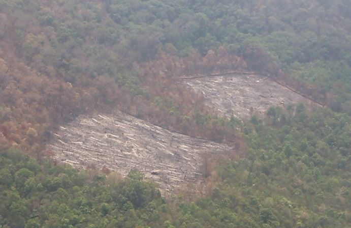 Plans to renew northern forests destroyed in recent fires   News by Thaiger