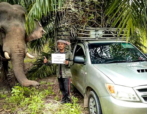 Ethical sanctuaries looking after over 250 elephants in southern Thailand   News by Thaiger