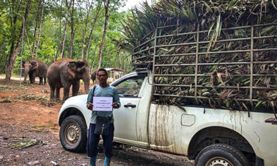 Ethical sanctuaries looking after over 250 elephants in southern Thailand | The Thaiger