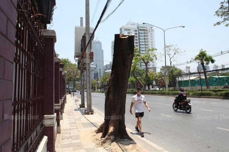 Bangkok authorities under fire for over-zealous tree pruning   News by Thaiger