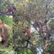 Chiang Mai firefighters chased up a tree by wild elephants | The Thaiger