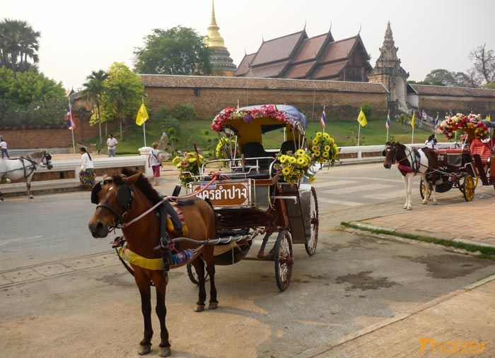 Lampang's horses, and their caretakers, doing it tough   News by Thaiger