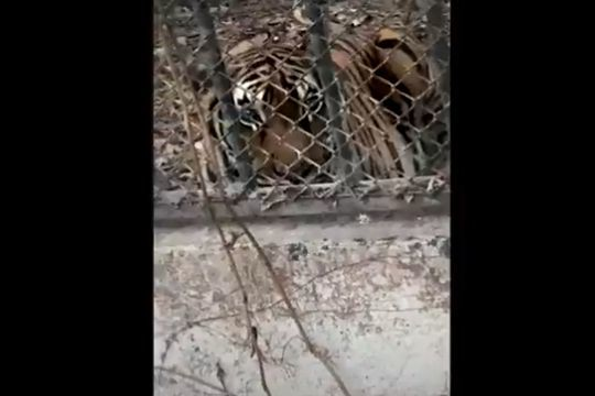 UPDATE: Phuket Zoo animals left abandoned and starving - VIDEO   News by Thaiger