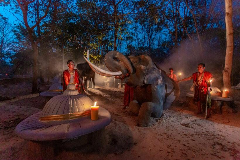 Feeding Asia's elephants in a Covid-19 era | News by Thaiger