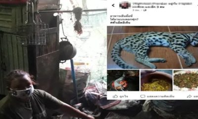 Woman cooks and eats Leopard, posts her kitchen skills on Facebook attracting widespread outrage | The Thaiger