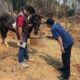 Stricken horse farm owners consider suing government over AHS virus outbreak | Thaiger