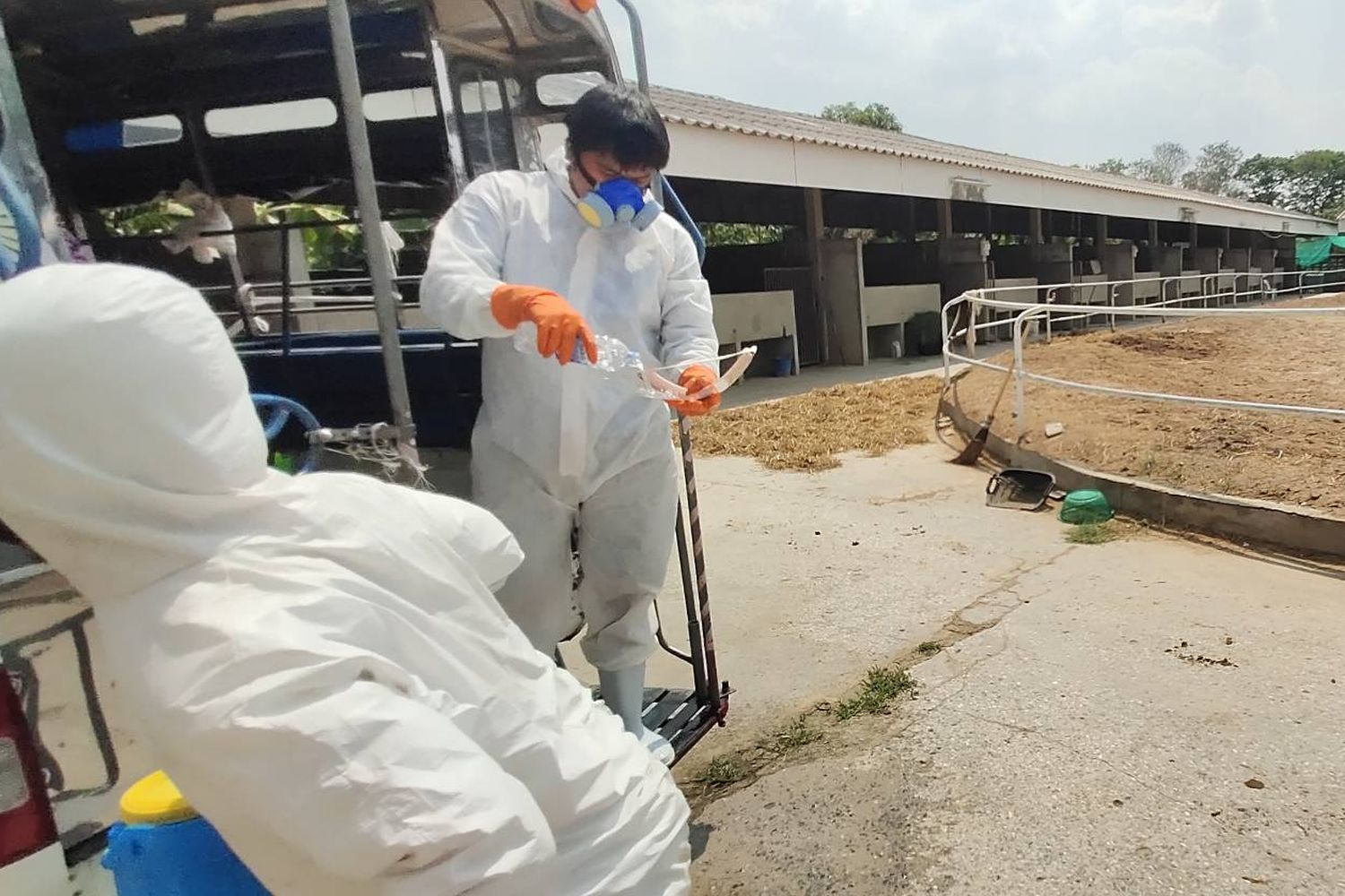146 horses dead in Korat of African Horse Sickness   News by Thaiger