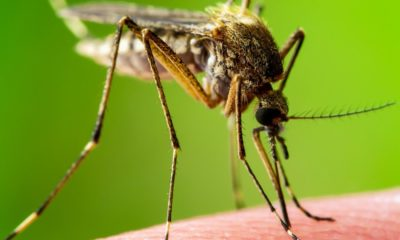 Dengue fever on the rise in Isaan | Thaiger