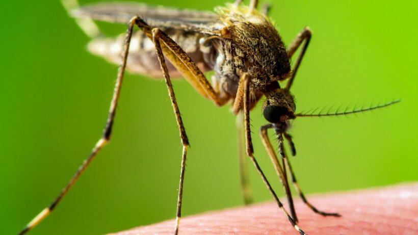[Image: mosquito-2_0.jpeg]