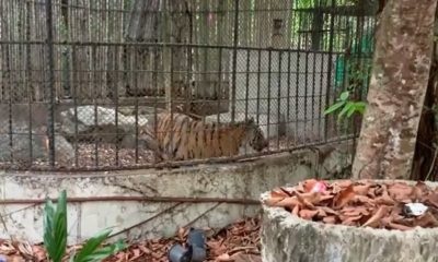 """It's all a misunderstanding"" – 4 people arrested for trespassing Phuket Zoo 