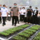 University in Korat plants more than 3,000 cannabis plants | The Thaiger