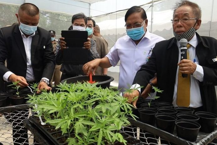 University in Korat plants more than 3,000 cannabis plants | News by Thaiger