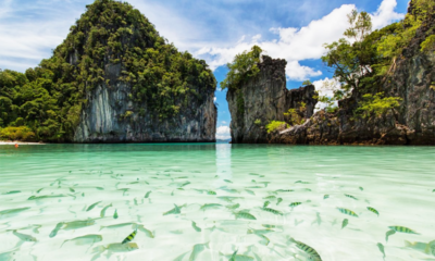 Blacktipped reef sharks return to Koh Hong, Krabi – VIDEO | The Thaiger