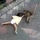 Bike-riding monkey attacks, drags Indonesian toddler – VIDEO | Thaiger