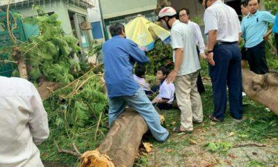 Cận cảnh hình ảnh vụ cây phượng bật gốc khiến 1 học sinh tử vong và 12 học sinh bị thương | Thaiger