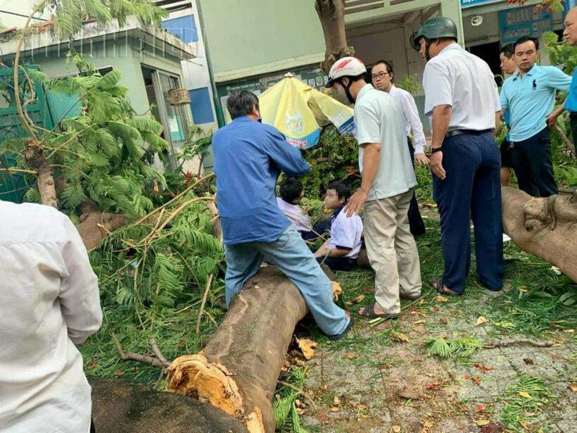 Cận cảnh hình ảnh vụ cây phượng bật gốc khiến 1 học sinh tử vong và 12 học sinh bị thương | The Thaiger